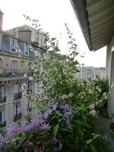 Balcon transformé en une année http://www.pariscotejardin.fr/2013/08/balcon-transforme-en-une-annee/