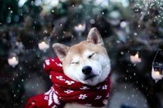 Winter fun by Jessica Trinh