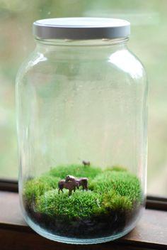 eine wunderschöne Terrarium. zwei Pferde kuscheln und ein Solo Pferd in der Ferne in einer süßen Moosbedeckte Welt. das Glas ist ungefähr 10 Zoll groß. Pferd-Farben können abweichen.  helles indirektes Licht und eine seltene Nebelbildung halten Ihre Moos grün.  Pflegehinweise sind enthalten.