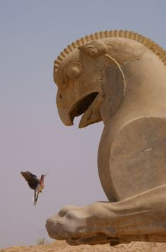 A Laughing Dove, beak to beak with an Achaemenid griffin in Persepolis, Iran.