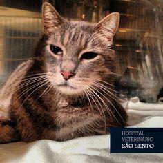 Hoje o nosso Afonso está muito pensativo ;) #gato #internamento #hospital #veterinario #lisboa https://www.facebook.com/veterinariopt