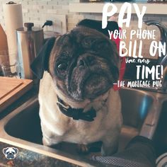 #HappyTuesday - Your #mortgagepugtip of the day is around Credit!Paying your bills on time has always been the most important credit habit. Equifax includes phone companies on #credit bureau reports  so your lender can see if you have any delinquencies with your phone bills. Look like a good borrower by making your payments on or before the due date!