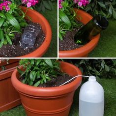 Keep Your Plants Happy And Hydrated With These 3 Self-Watering Hacks I just got a lot of energy from the plant ㅎㅎ I will always be careful not to dry up! 3 Self-Watering Hacks For Plants Growing Plants, Growing Vegetables, Growing Herbs Indoors, Planting Vegetables, Garden Crafts, Garden Projects, Diy Projects, Diy Crafts, Indoor Garden