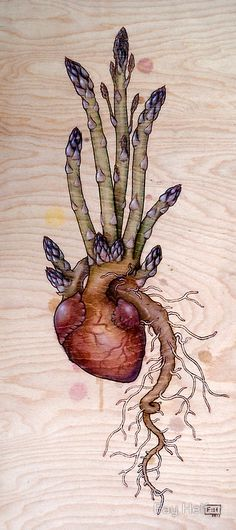 Asparagus Heart