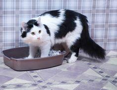 Como ensinar gatos a urinar no lugar correto