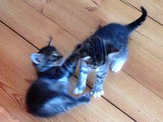 Leikitäänkö? ;) Cats, Animals, Gatos, Kitty Cats, Animaux, Animal, Cat, Animales, Kitty