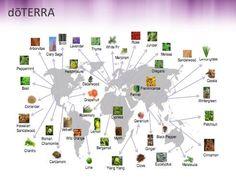 doterra's oils sourced