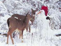 The deer meets the snowman. <3