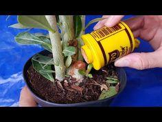 Cement Pots, Goat Farming, Diy Gift Box, Beautiful Flowers, Flora, Cactus, Garden, Youtube, Desert Flowers