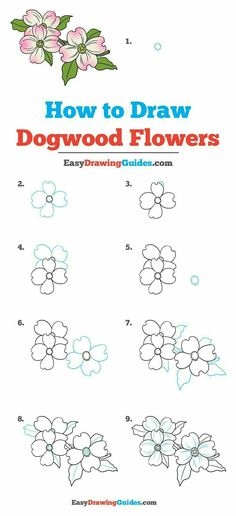 how to draw dogwood flowers really easy drawing tutorial