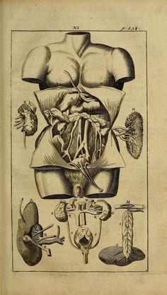 Grabado anatómico de urología (1703)