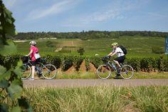 Autour du gîte et dans les alentours, sillonnez les vignes à vélo (5 VTT à votre disposition).