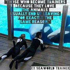 Empty The Tanks . Freedom . Anti Captivity . Dolphins . Don't buy a ticket . SeaWorld . Twitter: @seaworldisevil