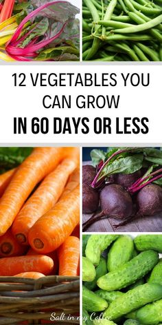 If you need to grow food in a short time, these fast-growing vegetables are your best bets! Here are 12 different vegetables you can grow in less than 60 days, along with the best fast-maturing varieties to look for! Home Vegetable Garden, Fruit Garden, Edible Garden, Dish Garden, Veggie Gardens, Growing Grapes, Growing Plants, Different Vegetables, Fruits And Veggies