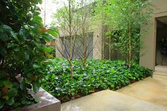 Garden Beauty from the Ground Up, with Flooring by Art in Green