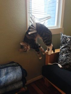 47 Funny Cat Fails of Cats Who Regret Everything In Life, Immediately