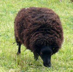 Black Sheep, her name was Miep