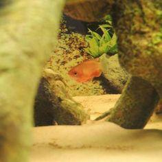 Peter's fish enjoying their All Pond Solutions fish tank!