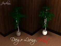 Jindann's Diego Living Plant