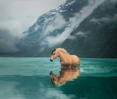 Very interesting. I did not know that horses went in water. Very interesting. I did not know that horses went in water. - Art Of Equitation All The Pretty Horses, Beautiful Horses, Animals Beautiful, Nature Animals, Animals And Pets, Cute Animals, Cute Horses, Horse Love, Equine Photography