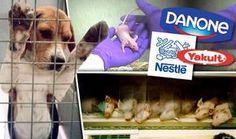 Es wurde aufgedeckt, dass Nestle, Danoneund Yakultimmer noch fürchterliche, grausame, tödliche Tierversuche durchführen.Der TierschutzvereinCFI – Cruelty Free International ist Partner von Ärzt…