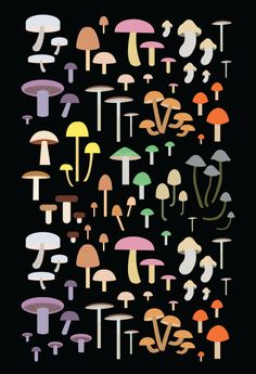 eatsleepdraw:  Fungi Collection by Alysha Dawn...