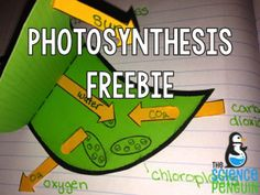 Photosynthesis Notebook Freebie