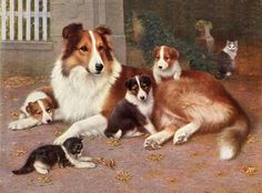 ROUGH COLLIE MOTHER AND PUPS LOVELY LITTLE DOG PRINT
