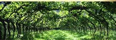 Home Main Image Mooiuitsig Wineries Living Fence, Garden Living, Tourism In South Africa, South African Wine, Wine Tourism, Vineyard, Explore, Flowers, Plants