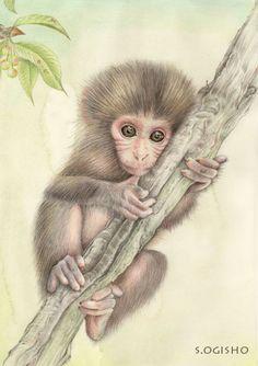 ニホンザル Creatures, Draw, Bird, Wallpaper, Animals, Illustrations, Wallpaper Desktop, Animales, Animaux