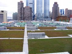 The sedum-topped roof of NYC's Javits Center