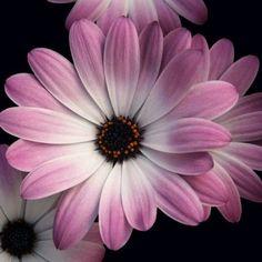 10 πανέμορφα φυτά για ζαρντινιέρες που ομορφαίνουν το μπαλκόνι! Hair Beauty, Gardening, Plants, Lawn And Garden, Plant, Planets, Cute Hair, Horticulture