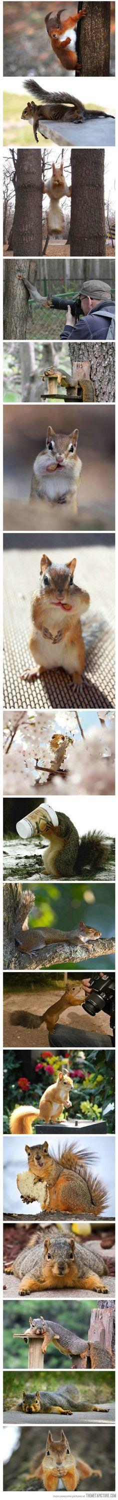 Squirrels being squirrels…