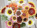 Petunia Seeds and Plants - Single and Double Flowered, Spreading and Hedging Flowers at Burpee.com