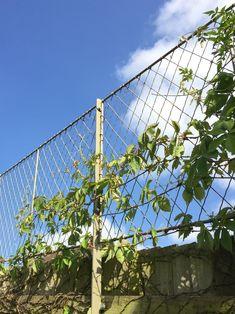 Metal garden trellis made from zinc galvanized wirework. Trellis panels for privacy and trellis fencing by Garden Requisites. Garden Trellis Panels, Metal Trellis, Trellis Fence, Garden Fencing, Garden Soil, Gardening, Garden Images, Garden Pictures, Fence Design