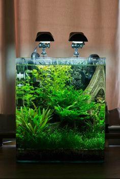 idée de design de nano aquarium