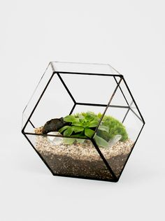 The geometric lines of this planter/terrarium from Score + Solder are a great counterpoint to leafy greenness