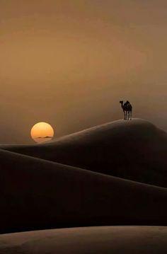 Kamel stand in der Wüste Und seufzte ach und bang Es fand ihn so romantisch Den Sonnennuntergang.