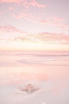 Pink Summer Day at the Beach! Cute Wallpapers, Wallpaper Backgrounds, Blush Wallpaper, Ocean Wallpaper, Beautiful World, Beautiful Places, Pink Aesthetic, Pretty Pictures, Beach Pictures