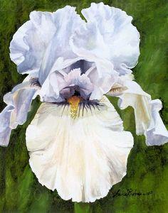 Original Watercolor Painting White Iris 11 x 14 by BetweenTheWeeds, $500.00