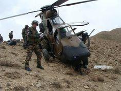 Tiger Afganistan