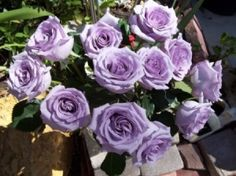 Sterling silver roses -- my favorite roses and one of my favorite flowers.  Had these in my bridal bouquet -- rare but soooo beautiful.  My favorite color is purple, any and all shades, but especially lavender.