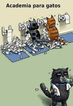 ❤️ #amorincondicional #gato #amoanimais #maedepet #filhode4patas #petmeupet #petshop #filhote
