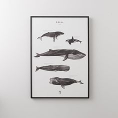 Art – Schoolhouse Electric & Supply Co. Largest Sea Creature, Graphic Prints, Art Prints, Whale Print, Visual Texture, Painting Gallery, Ocean Themes, Sea Creatures, Art For Kids