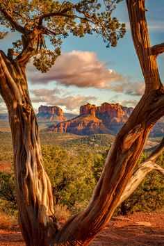 Sedona morning (Arizona) by David Curry
