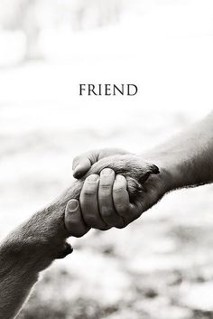 Dog = Man's best friend