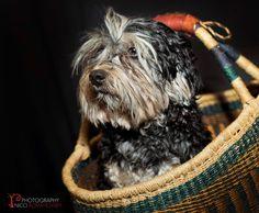 eater dog - shotbynicci Real Estate Photography, Glamour Photography, Professional Photography, Animal Photography, Albany Western Australia, My Photos, Dogs, Animals, Animales