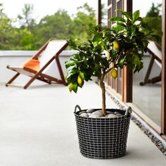 Korbo Planting Bag and basket