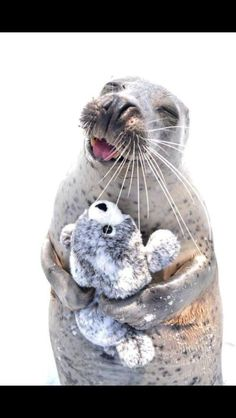 PsBattle: This happy seal hugging a seal doll