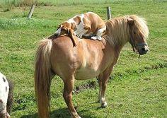 Animali in posa: gli scatti più divertenti del 2012